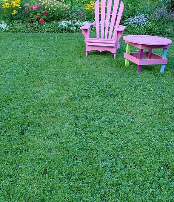 4 Good Grass Alternatives For The Cottage