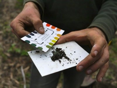 Testing Your Garden's pH Levels For Maximum Yield